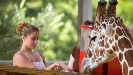 Metro-Zoo-Chesterfield