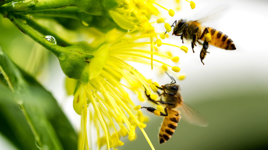 'BEES & BREW' NATIONAL POLLINATOR WEEK CELEBRATION AT THE BOTANICAL  CONSERVATORY