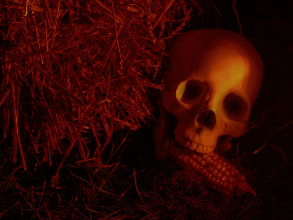 skull_with_corn_2007